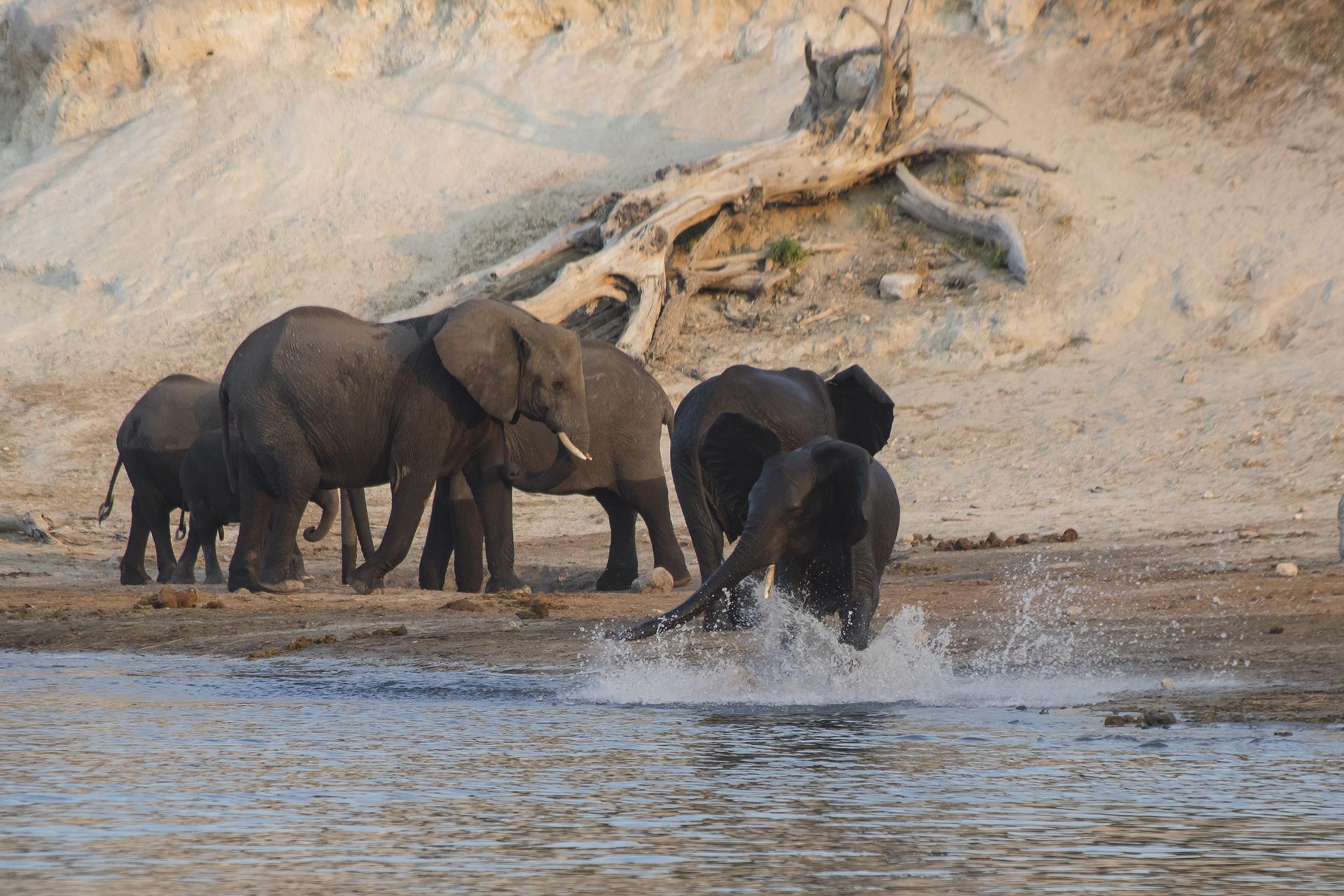 Tant qu'il y aura des éléphants (10)