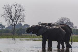 Tant qu'il y aura des éléphants (14)
