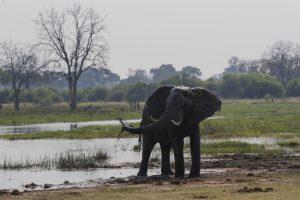 Tant qu'il y aura des éléphants (15)