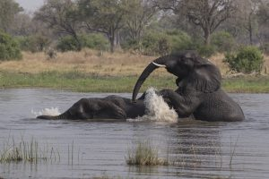 Tant qu'il y aura des éléphants (16)