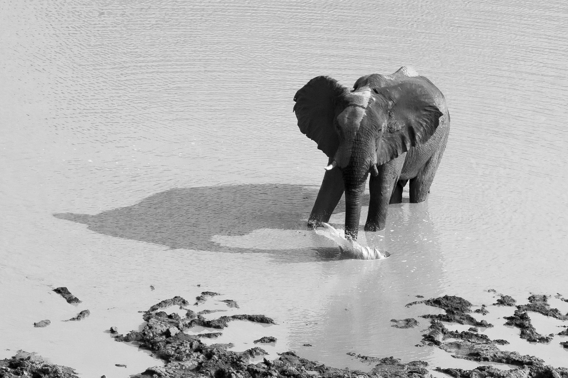 Tant qu'il y aura des éléphants (19)