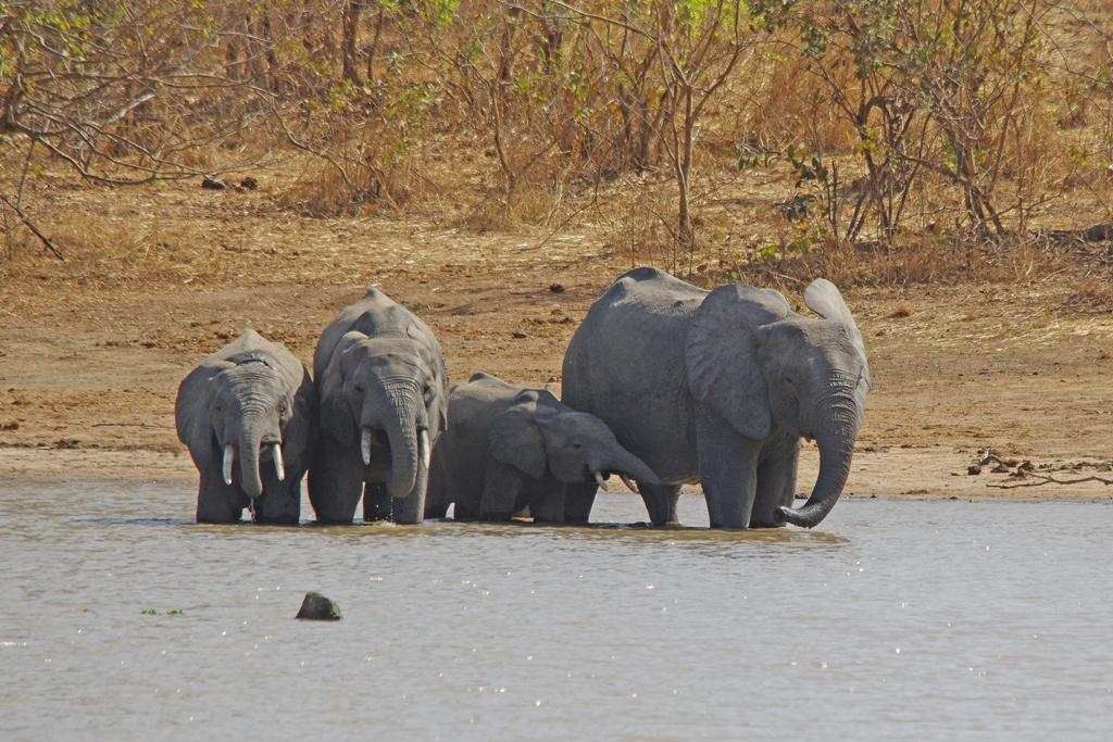Tant qu'il y aura des éléphants (22)