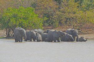 Tant qu'il y aura des éléphants (24)