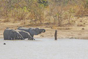 Tant qu'il y aura des éléphants (25)
