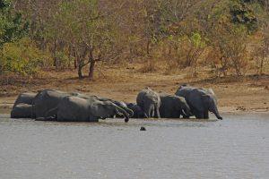 Tant qu'il y aura des éléphants (27)