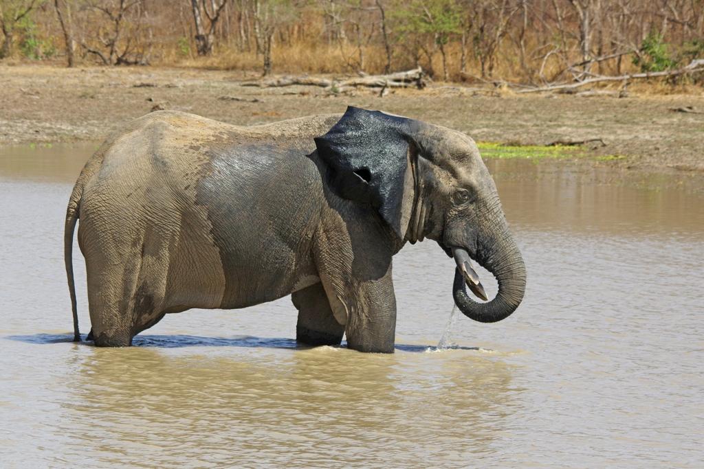 Tant qu'il y aura des éléphants (29)
