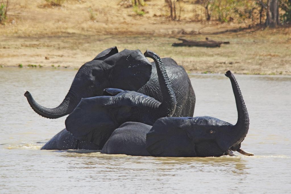 Tant qu'il y aura des éléphants (34)