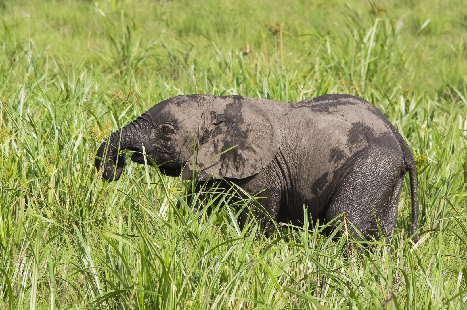 Tant qu'il y aura des éléphants (43)