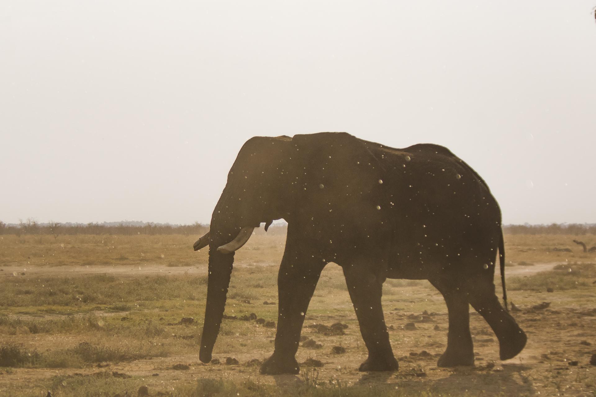 Tant qu'il y aura des éléphants (44)