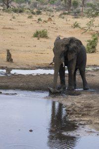 Tant qu'il y aura des éléphants (45)