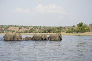 Tant qu'il y aura des éléphants (5)