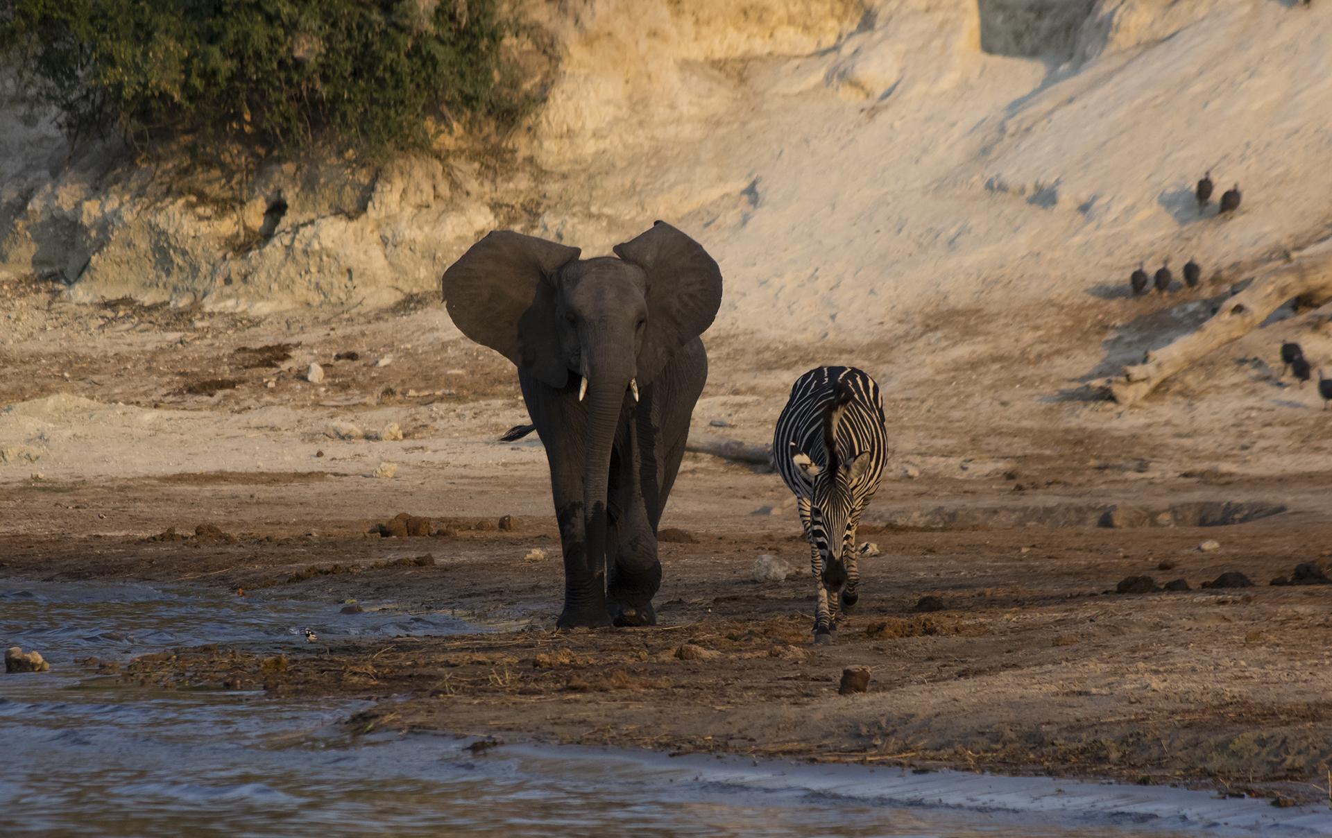 Tant qu'il y aura des éléphants (8)